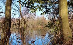 Brandon Marsh, Grebe Pool (kestrel49) Tags: uk england europe britain naturereserve gb 12 warwickshire 2012 brandonmarsh brandonmarshes