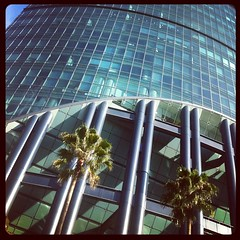 Palm Trees, Steel, and Glass #mexicocity #mexico #mexicodf
