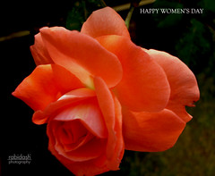 ~HAPPY WOMEN'S DAY~ (rabidash*) Tags: pink india colour love nature colors beautiful rose happy cool fantastic women flickr day colours friendship shot good awesome great valentine explore creation dash excellent click colourful lovely orissa rabi rabindra happywomensday rabidash excxellent rkdash photocontesttnc12 rabidashphotography naturearttnc12