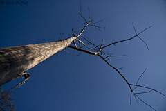 Looking Above (aleemsm) Tags: blue sky sunlight tree bhutan reverse barren