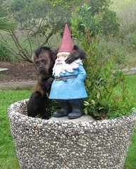 Making new friends at Wild Things in Salinas, CA (SeeMonterey) Tags: montereycounty travelocity roaminggnome