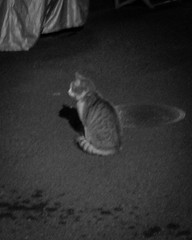 Today's Cat@2013-04-28 (masatsu) Tags: bw cat canon catspotting thebiggestgroupwithonlycats powershots95