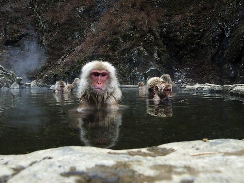 Spa monkeys #1
