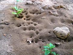 Ant hill (M.K.Muruganandan) Tags: ant hill