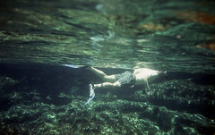 Great Barrier Reef (trom.pom) Tags: ocean travel holiday film nature analog swim 35mm underwater australia sealife adventure explore snorkelling analogue greatbarrierreef expiredfilm filmphotography canonsureshotwp1
