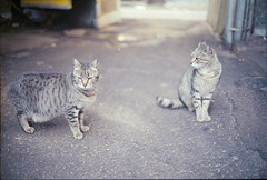 (333Bracket) Tags: camera cats film animals 35mm telaviv twins rangefinder carmel analogue shuk canoncanonetql17giii fujixtra400 333bracket