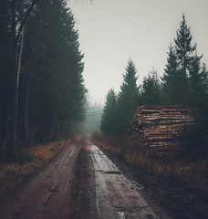 500px Photo ID: 105259873 (andrejsmaculskis) Tags: road wood fog forest finland