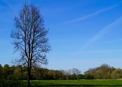 Grne Oase (jan.boettcher) Tags: tree landscape landschaft baum