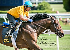 Daniel on Clement Trainee (EASY GOER) Tags: park horses horse sports belmont racing races thoroughbred equine
