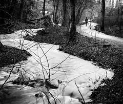 Follow the Stream (Andris Nikolajevs) Tags: longexposure travel trees blackandwhite nature monochrome forest river mono stream long exposure path svendborg nikond3300