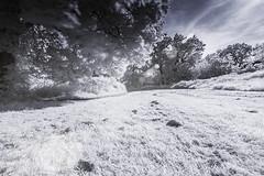 Local park (blackwoodse6) Tags: park blue white ir sony bluesky infrared foilage sunflare falsecolour hoyar72 infraredphotography 720nm sonya700