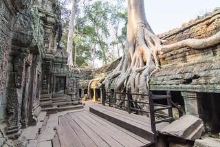 angkor - cambodge 2016 97