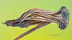 Pequenos detalhes (Jefferson Allan - Photographer) Tags: macro natureza infrared paisagens fotografiacampinas empilhamentodefoco jeffersonallan fotografojeffersonallan