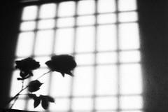 R0022119 (kenny_nhl) Tags: street light shadow blackandwhite bw black monochrome dark blackwhite shot 28mm streetphotography surreal scene snap explore malaysia visual ricoh provoke grd explored streephotography grd4 grdiv