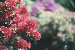 13 (amichalska) Tags: summer plants plant nature vintage bokeh outdoor poland canon350d boho helios