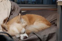 Fujifilm X70 : June 25, 2016 (takuhitofujita) Tags: flickr 犬 動物 eyefi eyeficloud fujifilmx70
