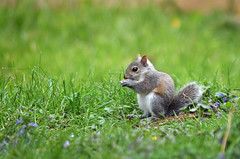 Time to Fledge (MTSOfan) Tags: rodent squirrel babysquirrel