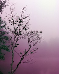 (GBrosseau) Tags: nature forest woodland landscape purple barebranches