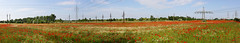 Electric ponceau field (Majorimi) Tags: blue red sky panorama flower color colour tree green industry nature beautiful field grass digital canon eos nice wire flora colorful hungary calm pole poppy electricity ponceau 70d