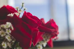IMG_4186 (Josy'ta) Tags: rose rosas rosascolombianas flowers flores flor diadosnamorados love