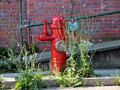 Hydrant II (2bmolar) Tags: hydrant weeds