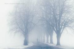Enchanted Trees 15/52 (Sophia Alexis) Tags: blue trees dog white fog canon person eos 50mm sigma 7d