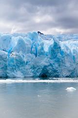 Grey Glacier (glancingshots.london) Tags: torresdelpaine condor lagoargentino lagogrey glaciergrey guanacos greyglacier blackfacedibis uplandgoose lakedickson torresdelpainecircuit pasojohngarner towersofpaineglaciergreygreyglacier lagodicksonperosglacier patagonianuplandgoose glaciercuernos