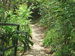 Path to Heaven (AboutAllThingsLiz) Tags: green nature hawaii heaven path maui stairway