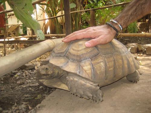 Turtle in Bamako