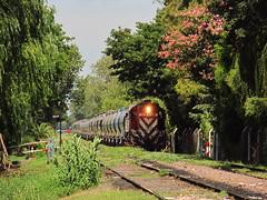 El de la vuelta del perro... (Sirio Jackson) Tags: argentina del train tren gm rosario roca sarmiento carril emd haedo pampeano fepsa ferroexpreso