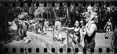 Olha a Tartaruga! (k.jessen) Tags: street people blackandwhite lomo lomography candid sopaulo toycamera photowalk kodaktrix zoolgico pretoebranco tartaruga sprockethole gianttortoise kodakd76 zoolgicodesopaulo kodakd7611 sprocketholephotography kodaktrix40035mm film:iso=400 clicksp sprocketrocket film:brand=kodak fotoclubeabcclick film:name=kodaktrix400 developer:brand=kodak developer:name=kodakd76 jabutigigante filmdev:recipe=7442