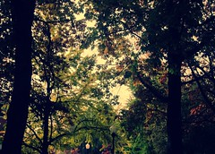 Tattoos (Mohammed Ghanem) Tags: morning trees sky color green fall oregon leaf eugene shade purble i12