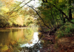 Over the Water (h_roach) Tags: autumn trees fall nature water yellow horizontal creek river outdoors branches peaceful
