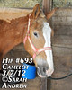 Hip #693 (Rock and Racehorses) Tags: amish belgian camelot draft workhorse feedlot ska0828