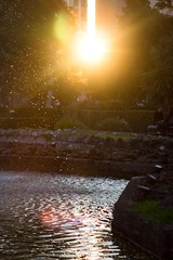 Sunny gardens (Marie Hlne) Tags: park sunset reflection water drops palermo giardinoinglese