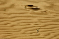 Sand Waves (TARIQ-M) Tags: shadow abstract art texture sahara landscape sand waves pattern desert ripple patterns dunes wave abstraction ripples riyadh saudiarabia   canoneos5d    goldensand   canonef70200mmf4lusm         canoneos5dmarkii