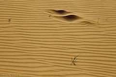 Sand Waves (TARIQ-M) Tags: shadow abstract art texture sahara landscape sand waves pattern desert ripple patterns dunes wave abstraction ripples riyadh saudiarabia بر الصحراء canoneos5d الرياض صحراء ظل goldensand رمال رمل canonef70200mmf4lusm طعس كانون المملكةالعربيةالسعودية الرمل خطوط تجريد صحاري ظلال canoneos5dmarkii نفود الرمال كثبان براري تموجات تموج نفد اربيسك