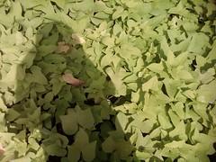 Shadow (daEsUke_cHan) Tags: background jakarta ban taman anak daun fotografi pemandangan kecil fotofoto burung menteng penghijauan kumpulkumpul lucubayangan rangkabunga