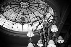 (Stephenie Schukraft) Tags: world bw lake film glass 35mm nikon florida kodak skylight grand disney stained chandelier dome vista buena floridian bw400cn n65