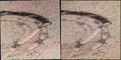 s-1P388562364EFFBR51P2572L234567R1234567regT_LMask (hortonheardawho) Tags: york opportunity mars meridiani haven mi 3d track cape greeley endeavour 2933