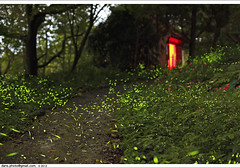 Fireflies glowed in Taipei night (*dans) Tags: taiwan april taipei  firefly fireflies