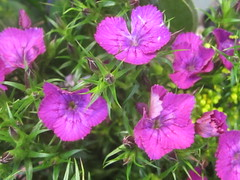 Purple Floral (shaire productions) Tags: life plants plant nature floral garden outdoors image vegetation imagery