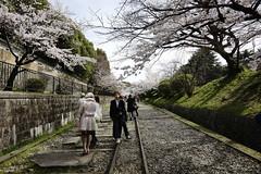 (ddsnet) Tags: travel plant flower japan sony 99  cherryblossom  sakura nippon  kansai  nihon hanami  slt backpackers              kytoshi kyotofu     singlelenstranslucent   99v