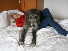 Perfect Hotel Guests (andywalker1) Tags: andrew walker muumi andrewwalker wolfhound andywalker