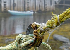 Tied up (halifaxlight (catching up)) Tags: blue canada seaweed yellow rock misty boat dock novascotia tire rope lowtide soe fishingvillage bluerocks vanagram beyondbokeh