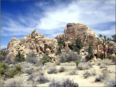 Hidden Valley, Joshua Tree NP 4-13-13h (inkknife_2000) Tags: california cactus usa landscapes rocks desert joshuatree skyandclouds nationalparks rockclimbing yucca joshuatreenationalpark rockpiles hedgehogcactus cactusblooms yuccablooms joshuatreeblooms dgrahamphoto