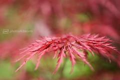 in my secret garden - 3 (photos4dreams) Tags: flower macro blume makro secretgarden photos4dreams photos4dreamz p4d