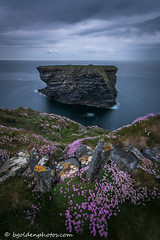 Pink Sea Thrift on the Cliffs at Kilkee (bob golden) Tags: ireland west outdoors coast countryside spring clare atlantic coastal earlysummer wildatlanticway