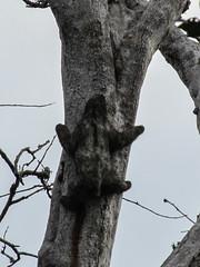 """Bocas del Toro: l'île aux Paresseux (bis) <a style=""""margin-left:10px; font-size:0.8em;"""" href=""""http://www.flickr.com/photos/127723101@N04/26726522944/"""" target=""""_blank"""">@flickr</a>"""