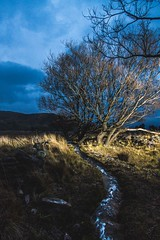 Strobits Tree (Franciscomateoo) Tags: tree canon landscape 7d nigth canonspeedlite strobist yongnuo removedfromstrobistpool incompletestrobistinfo seerule2 7dmark2